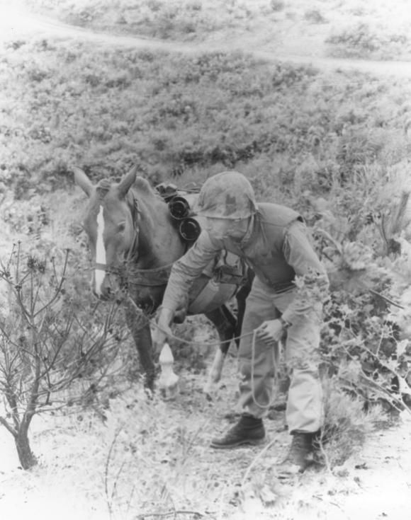 A Korean War hero, the mare Sgt. Reckless learned to step over wire and get down during incoming fire.
