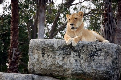 Una lettera di incoraggiamento continua ->  http://www.storiedicoaching.com/2014/02/08/una-lettera-di-incoraggiamento/  #coaching #antifragile #incoraggiamento #lettera #sconfitta #benessere #comportamento #coraggio #motivazione #risultati #leone