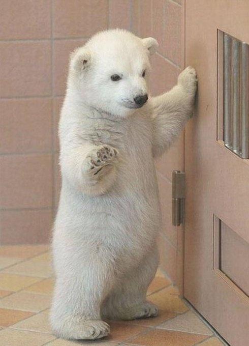 Aww: Babies, Cute Baby, So Cute, Polarbear, Baby Animal, Things, Baby Polar Bears, Cute Babies, Polar Bears Cubs