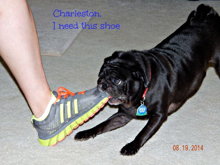 Charleston wants that shoe