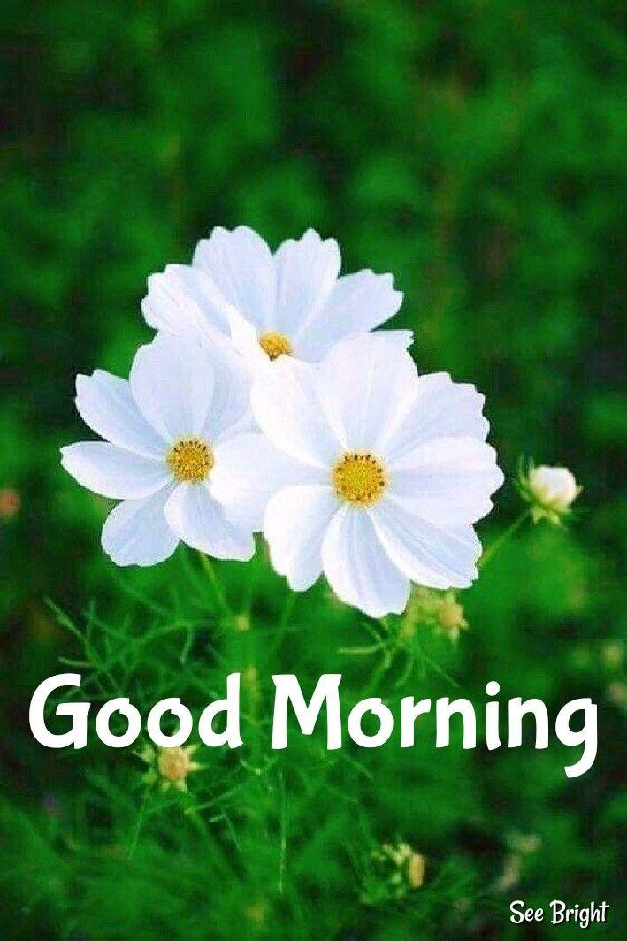 Good Morning Good Morning Images Flowers Good Morning Wishes Friends Good Morning Beautiful Pictures
