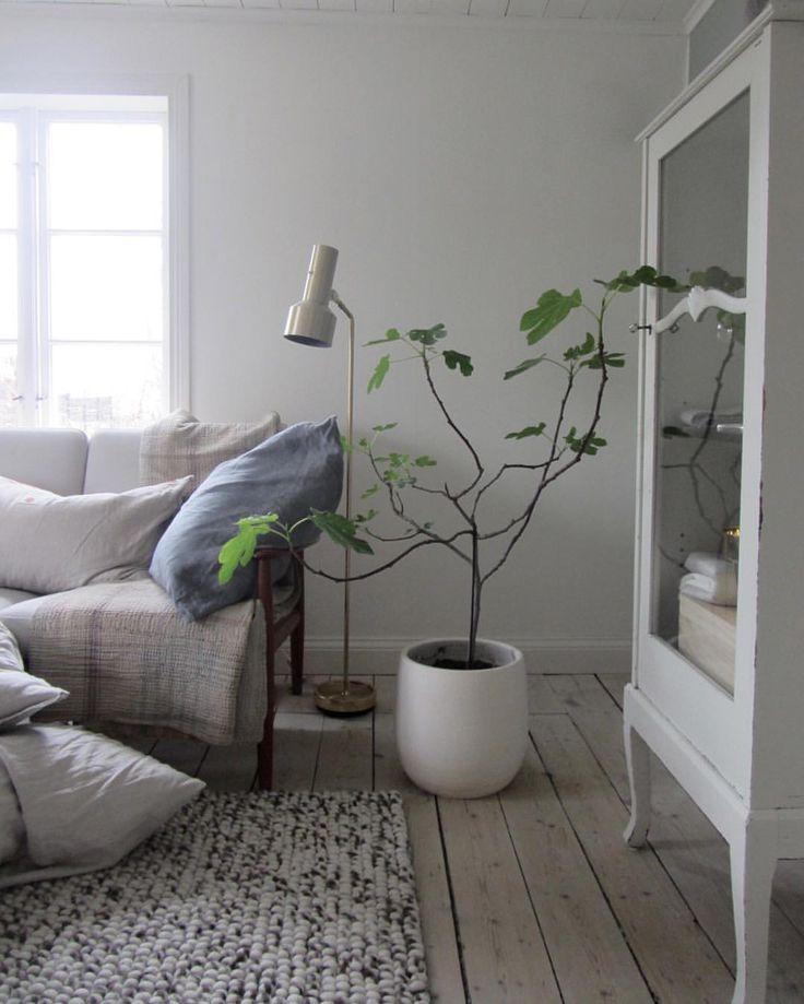 Spring sign som ni märker älskar jag växter och har källaren full av pelargoner och skott av olika slag. Brukar med jämna mellanrum pracka på mina vänner när samtliga ytor inte räcker till.