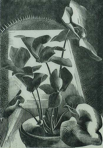Cyclamen - GERTRUDE HERMES - wood engraving