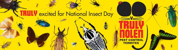 TRULY excited about the first-ever National Insect Day Saturday February 24! It will be February 24 in subsequent years, too.