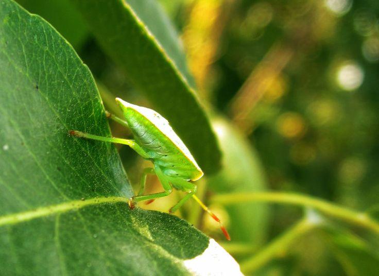 Bug 2 by ValerianVALI.deviantart.com on @DeviantArt