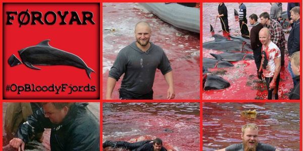 Protest against the slaughter of Pilot Whales in the Faroe Islands. http://www.thepetitionsite.com/es-es/627/555/201/protest-against-the-slaughter-of-pilot-whales-in-the-faroe-islands/