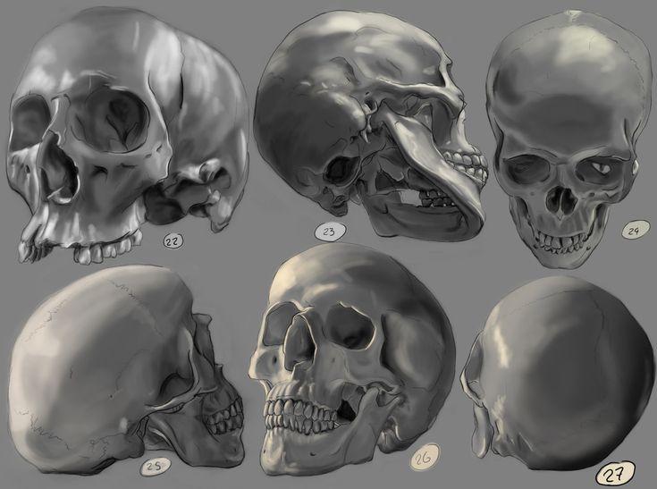 real skull angles wwwpixsharkcom images galleries