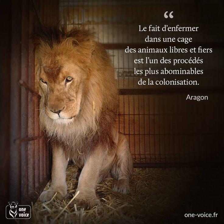 Le fait d'enfermer, dans une cage, des animaux libres et fiers est l'un des procédés les plus abominables de la colonisation. (Aragon)