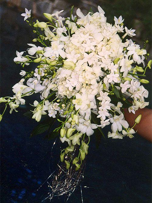 Alternative bouquet idea: stefanotis (maybe add white stock?)