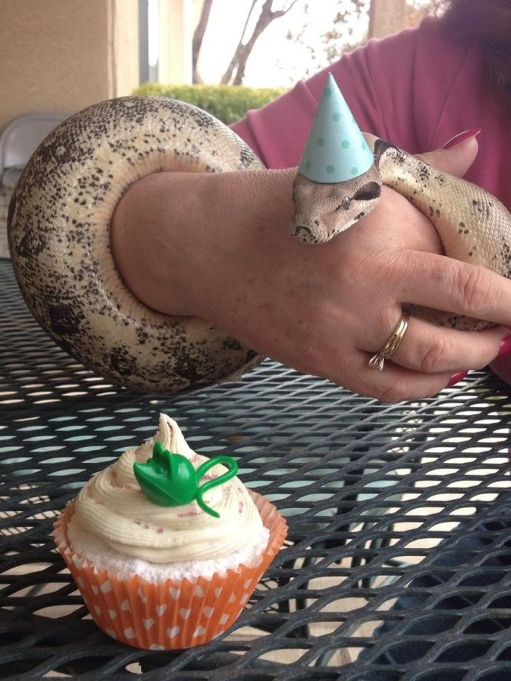 snakes in hats | Thread: Snakes in tiny hats!