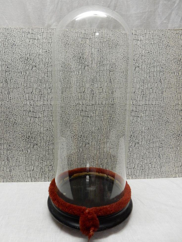 In goede staat verkerende glazen stolp met houten voetstuk uit 1845. De stolp is voorzien van een rood/bruine band om de scheiding tussen het hout en het glas af te schermen. De totale hoogte van de stolp op voetstuk is ongeveer 43 cm. Prijs € 100.00.