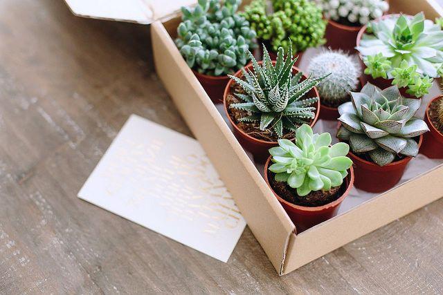 Best 25 Succulent Gifts Ideas On Pinterest Mini