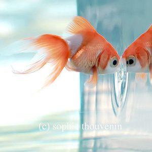 Poisson rouge par Sophie Thevenin #fish