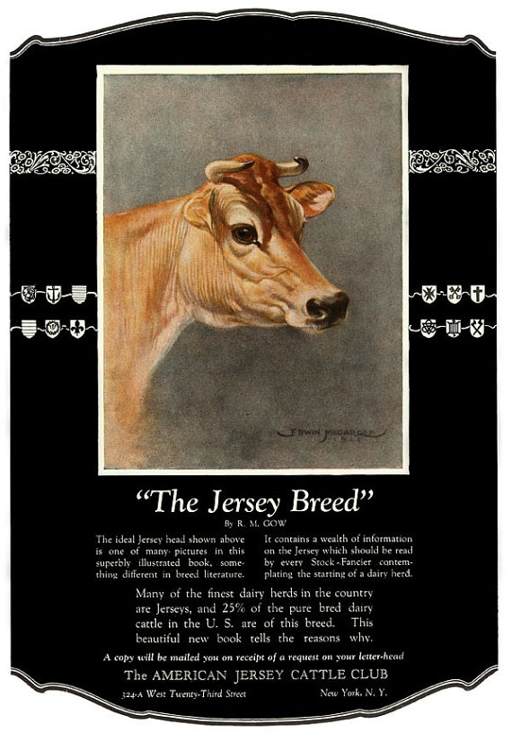 Vintage JERSEY Dairy Milk COW American Cattle by elevenvintage, $11.99