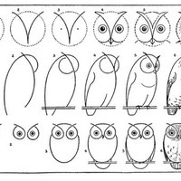 Owl sketch How-to
