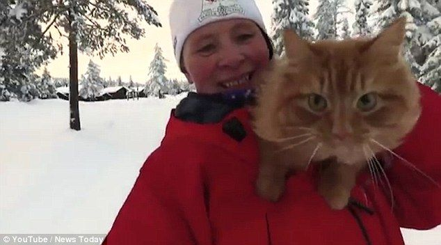 Happy: The cat is picked up and carried by his owner, who skis down the sloped section of ...