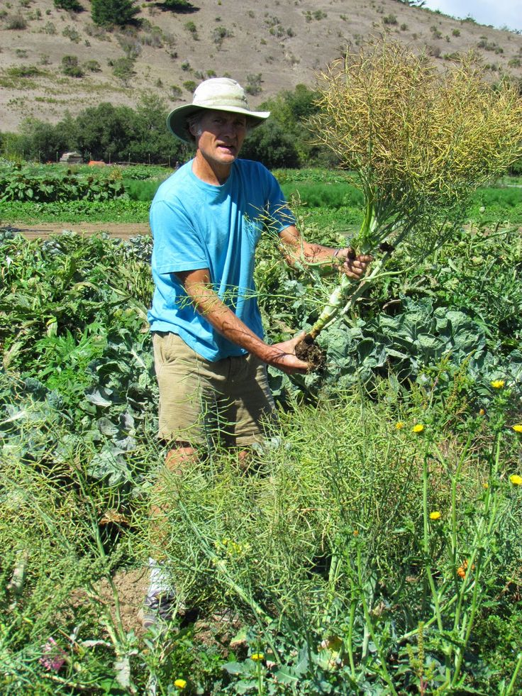 Broccoli and Napa Cabbage On-Farm Plant Breeding Projects at Fifth Crow Farm, in Pescadero, CA by Steve Peters