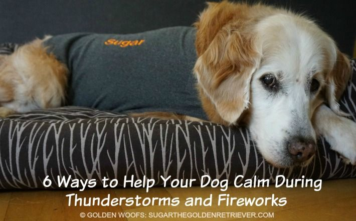 How To Keep Your Dog Calm During Thunderstorms and Fireworks - Sugar The Golden Retriever
