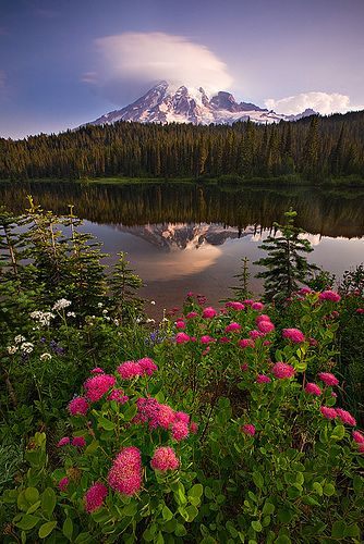 wildflowers, Mount Rainier National Park, WashingtonEars Mornings, Bergen Norway, Early Mornings, Mount Rainier, Rainier National, Soft Lights, Washington States, National Parks, Reflections Lakes