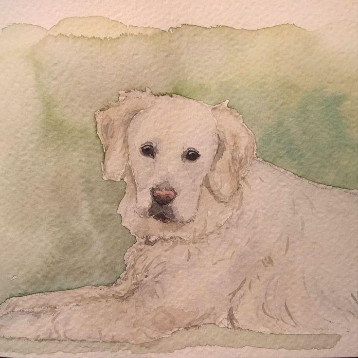 A watercolor painting of a golden retriever. #dogart #goldenretriever #watercolor #aquarelle #painting #dog #portrait #petportrait