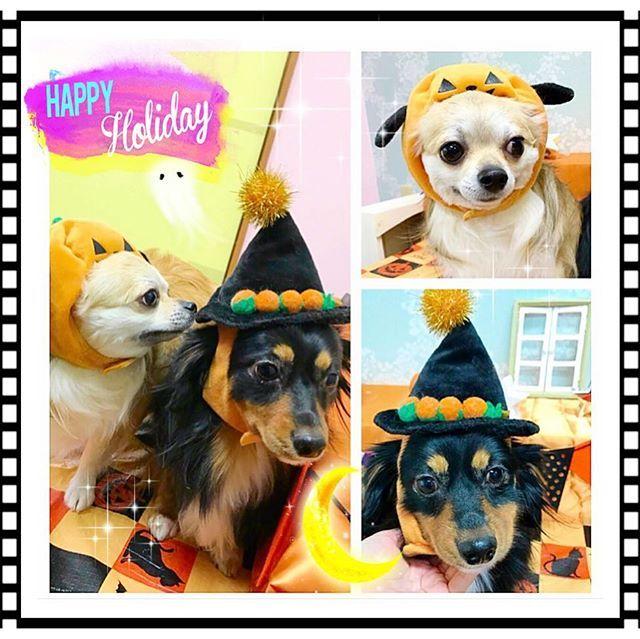 ティオちゃん♡イヴちゃん♡ #松本市 #塩尻市 #諏訪 #トリミング #trimming #love #cute #happy #イオンモール #dog #犬 #chanty #chihuahua #chihuahualove #チワワ #ロングチワワ #グルーミング#mixdog #pets #チワックス #ロンチー #スムースチワワ  #dogstagram #doglovers #トリマー #愛犬 #ロングコートチワワ #ちわわ #わんこ #可愛い