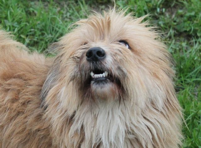 Rommy, vivace e simpatico, cerca casa! info: adozioni@leudica.org / ADOTTATO / ADOPTED!