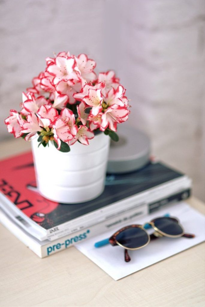 Zdrowe powietrze dzięki roślinom | Inspirowani Naturą | flowers