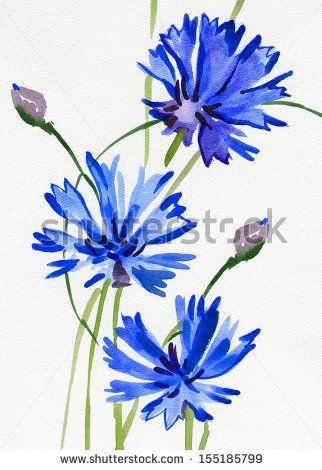 cornflower watercolor - Google Search