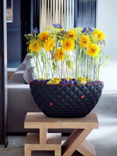 Sonnenblume Tollwasblumenmachen