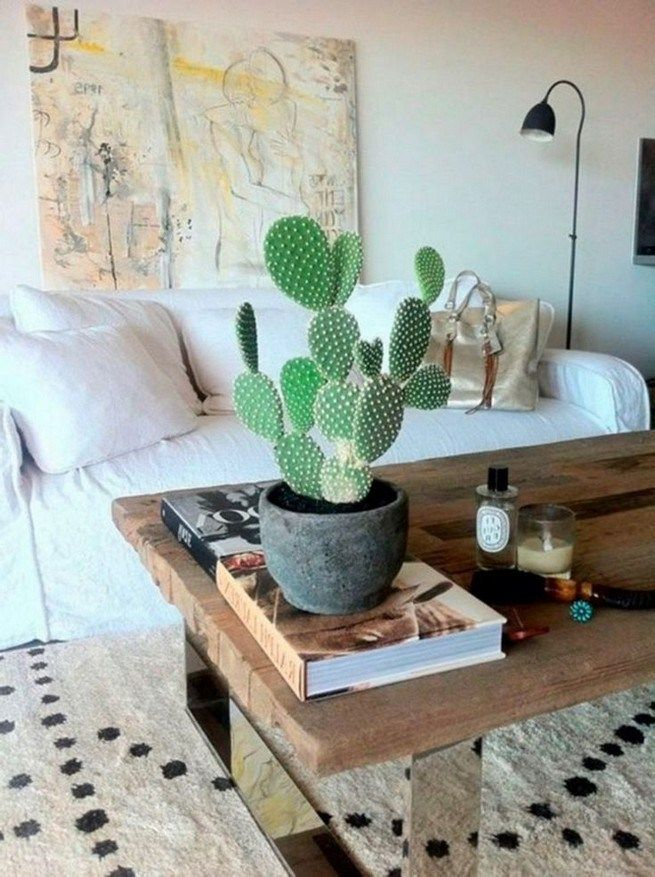 11 Lovely Small Cactus Ideas For Interior Decorations With