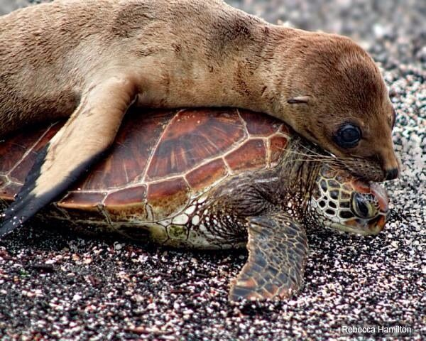 Sea turtle as mattress ;-)