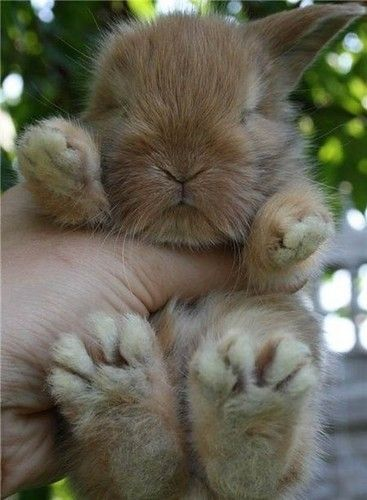 A baby bunny from the Easter Bunny!