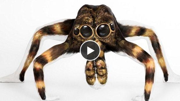 Cette mygale géante a de quoi effrayer les arachnophobes en tous genres
