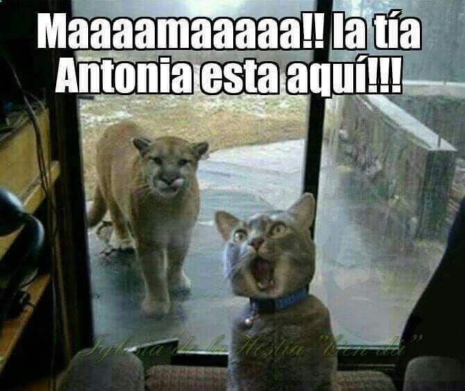 Ups ... #memes #chistes #chistesmalos #imagenesgraciosas #humor www.megamemeces.c... #videosgraciosos