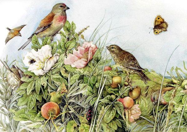 Pinson et Moineau - Marjolein Bastin