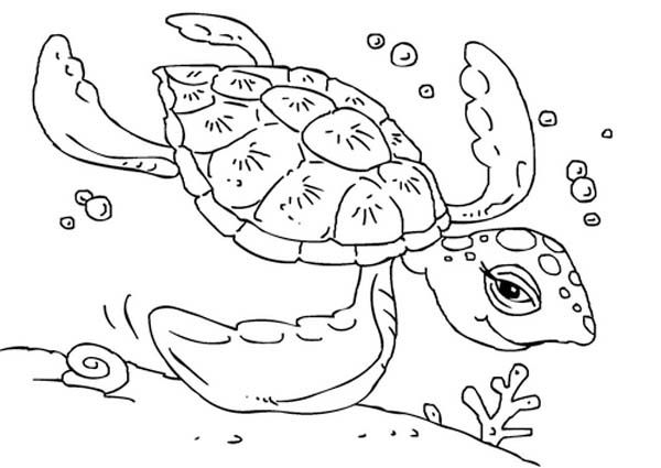 Sea Turtle Free Sea Turtle Swimming Coloring Page Turtle Coloring Pages Online Coloring Pages Coloring Pages