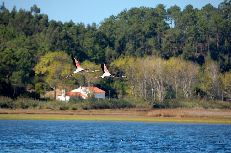 In the winter you can see the flamingo's -  Óbidos Lagoon