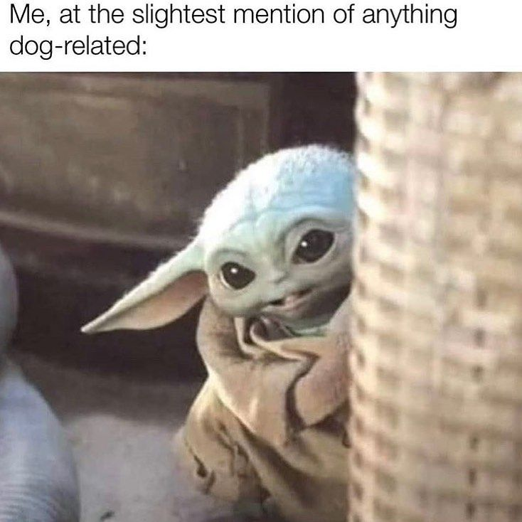 What Are You Talkin About Follow Super Galexy Doge Dog Dogsofinstagram Dogs Dogs Yoda Funny Star Wars Memes Yoda Meme