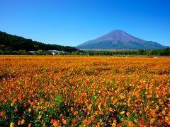 富士山も見れる四季を感じる山中湖花の都公園 秋はコスモス畑に美しい紅葉も楽しむことができますよ 山中湖のほど近くにありこちら入園は無料です 見事な富士とコスモス畑には圧巻ですね() 自然に癒されたい方ぜひ花の都公園へ遊びにいらしてください tags[静岡県]
