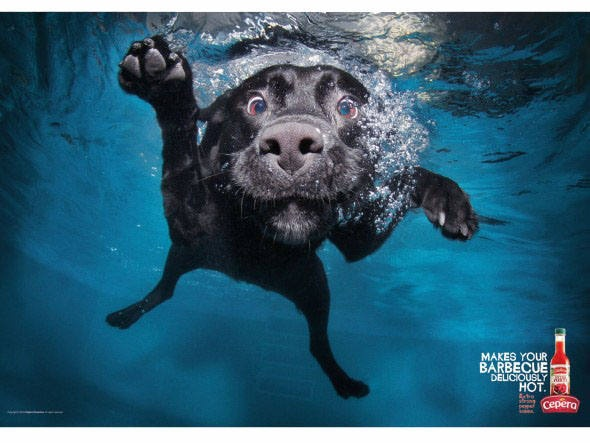 Cães submersos do fotógrafo Seth Casteel viram anúncios de molho de pimenta