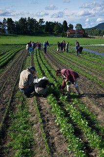 Andelslandbruk – En innovativ modell i norsk landbruk