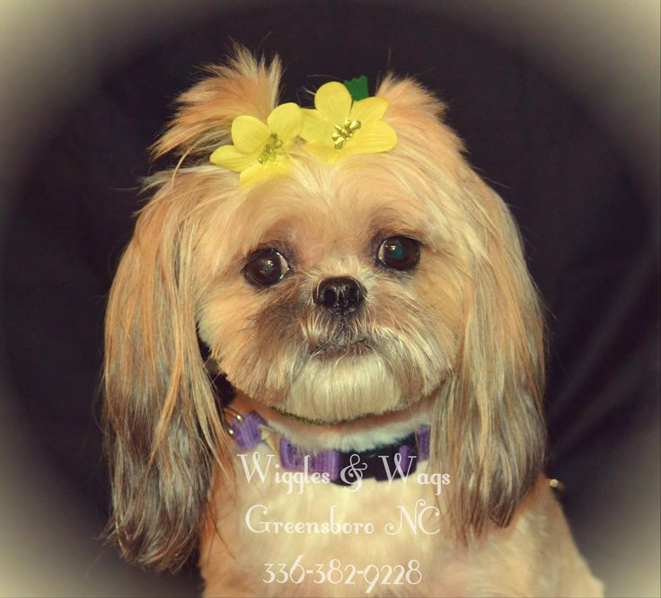 Wiggles & Wags Greensboro NC 3363829228 (With images