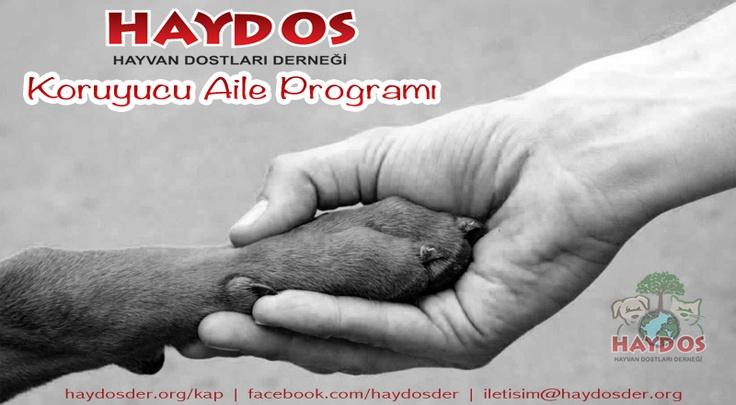 HAYDOS Koruyucu Aile Programı kapsamında, dostlarımızın uzaktaki aileleri olarak onlara yaşam mücadelelerinde destek olmak ister misiniz? Bilgi için: www.haydosder.org/kap    #kopek #kedi #hayvan #aile #kampanya
