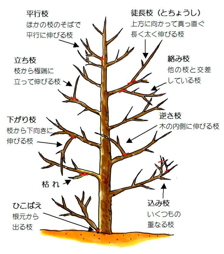 樹木剪定方法② 剪定の基本 浜松市・磐田市 エクステリア・外構 ハマニグリーンパーク