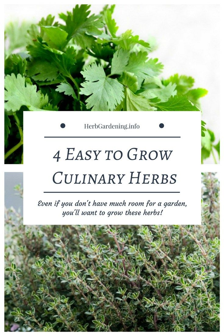4 Easy To Grow Culinary Herbs Ideal For Small Spaces Gardening