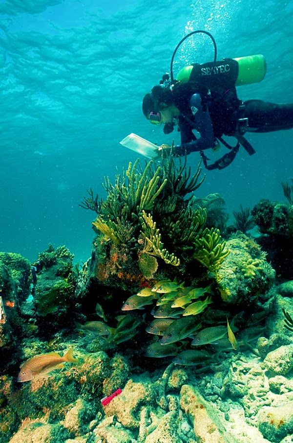 Best Snorkeling Scuba Diving Images On Pinterest Scuba - The snorkeling guide to florida 10 spots for underwater exploring