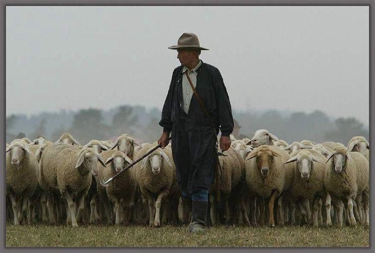 Eu nunca guardei rebanhos, /Mas é como se os guardasse. /Minha alma é como um pastor, /Conhece o vento e o sol...