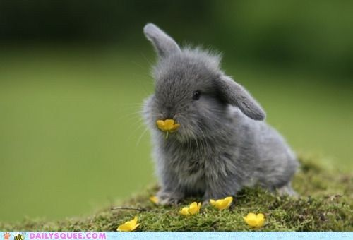 <3Rabbit, Funny Bunnies, Sweets, Chin Up, Easter Bunnies, Baby Bunnies, Ears, Yellow Flower, Animal