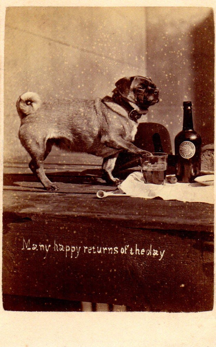 Vintage Doggy: A Pug with Beer