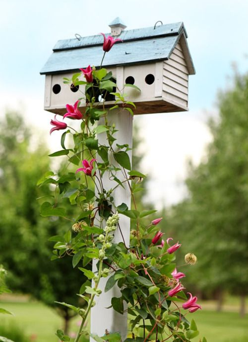 enredadera y casa de pájaros